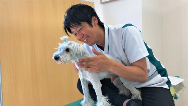 犬の整体・施術の様子2