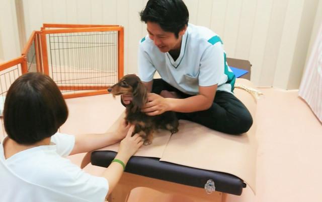 犬の椎間板ヘルニア(犬の腰痛)の画像